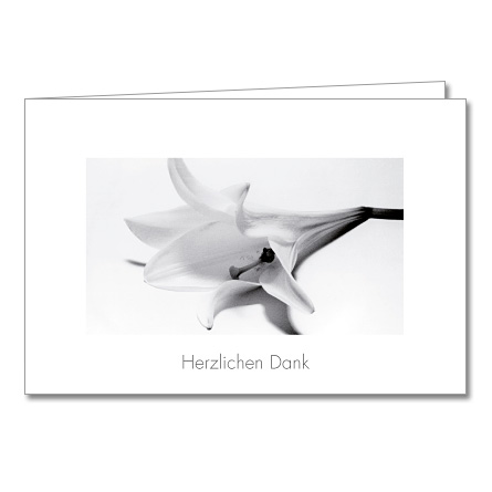 8 Beileidskarten Trauer-Karte Anteilnahme Kondolenzkarte Umschlag Lilie weiss